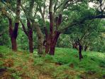 Forests of cork oaks are also found in the area. These are the base of the national cork industry