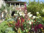 le jardin 'de curé' en été: exuberence et explosion de couleurs