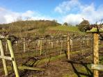 The Vineyard early spring