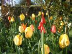vive le printemps !! c'est le mois d'avril