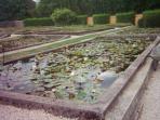 Famous Lily Farm