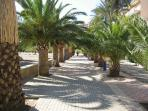 THE PALM FRINGED PASEO LEADING TO THE BARS,RESTAURANTS AND MARINA