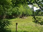 Our ponies grazing the cottage field on a lovely sunny afternoon.