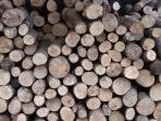 Plenty of logs for the wood burning stove