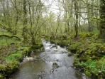 Woodland Stream - 5 minute walk from cottage