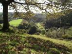 The valley and footpath below the farmhouse. Bratton Fleming is just behind the branches, up the hil