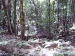 Parque Nacional de Garajonay