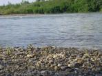 Arges river