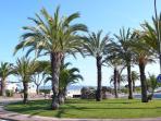palmiers sur la promenade