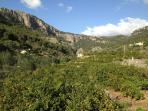 surrounding valley planted with oranges, olives, almonds and carobs