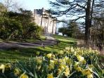 Craufurdland's   amazing daffodils.