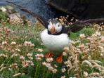 Tammie Norrie or puffin showing off his very smart coat!