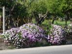 Paesagg di primavera