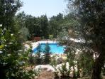 View to pool through gardens