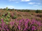 Views across the 365 hectare New Forest national park 5 minutes walk up the lane opposite