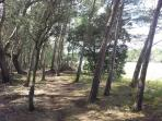 Promenade dans la Forêt privée attenante au Parc