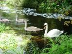 Wildlife in the local Doneraile Forest Park