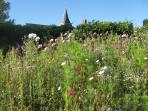 The village church behind our 'wild flower garden'