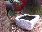 Jardin. Pájaro bebiendo