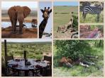 We can arrange safari through reliable companies.