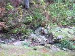 view of stream which fills up in spring times