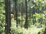 Vue de la forêt de Cap'Cabane entre chênes et pins