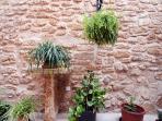 Plants at Patio