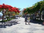 The tree-lined promenade of Playa San Juan