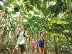 Walking under the likuala (fan) palms of the Daintree is a beautiful way to spend part of your day.
