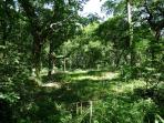 Surrounding woodland - privacy