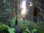 Early morning in Brechfa Forest - only minutes away