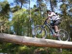 Dalbeattie '7stanes' - the award winning mountain bikers haven.  Great forest for walking