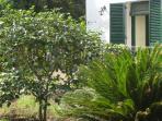 Garden, balcon - Giardino, balcone