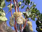 nearby wineyards - we can advise on wine tours and arrange wine tours
