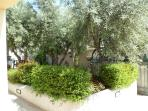 giardino con olivi