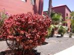 Abundante y variada vegetación en todo el complejo Tamarindo