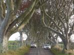 The Dark hedges nearby, widely photographed and used as film location for Game of Thrones.