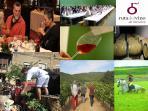 Podeís disfrutar de la Ruta del vino de Navarra, disfrutar de nuestros caldos, maridajes, senderismo