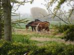 Les paddocks et les chevaux de trait de la ferme des Attelages de Cuzay'espace repasl