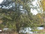 Lake - 5 minutes walk from La Mouline
