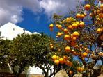 Naranjas means Oranges  :-)