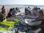 Local people sorting the catch