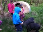Pig Feeding at Lower Hearson Farm