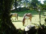 Our Ponies