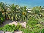 palms by beach