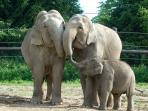 Blijdorp Zoo
