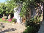 garden with carob.