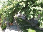 outer court with apricot