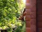 Red squirrels are regular visitors to the veranda - so long as there are some nuts out!
