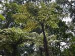 Fern palm trees in Magamba rainforest
